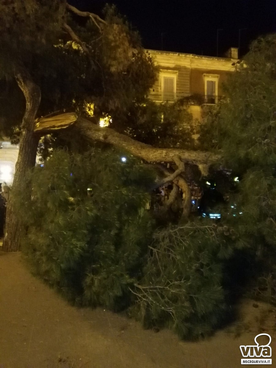 Ramo d'albero cede in piazza Vittorio Emanuele