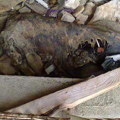 Carcassa delfino alle Grotte di Ripalta