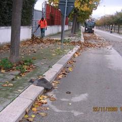 Diserbo e pulizia di strade e agro, report dell'amministrazione comunale