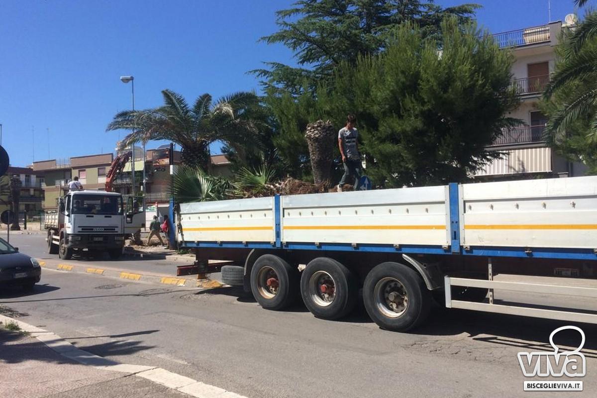 Cento nuovi alberi piantati a Bisceglie