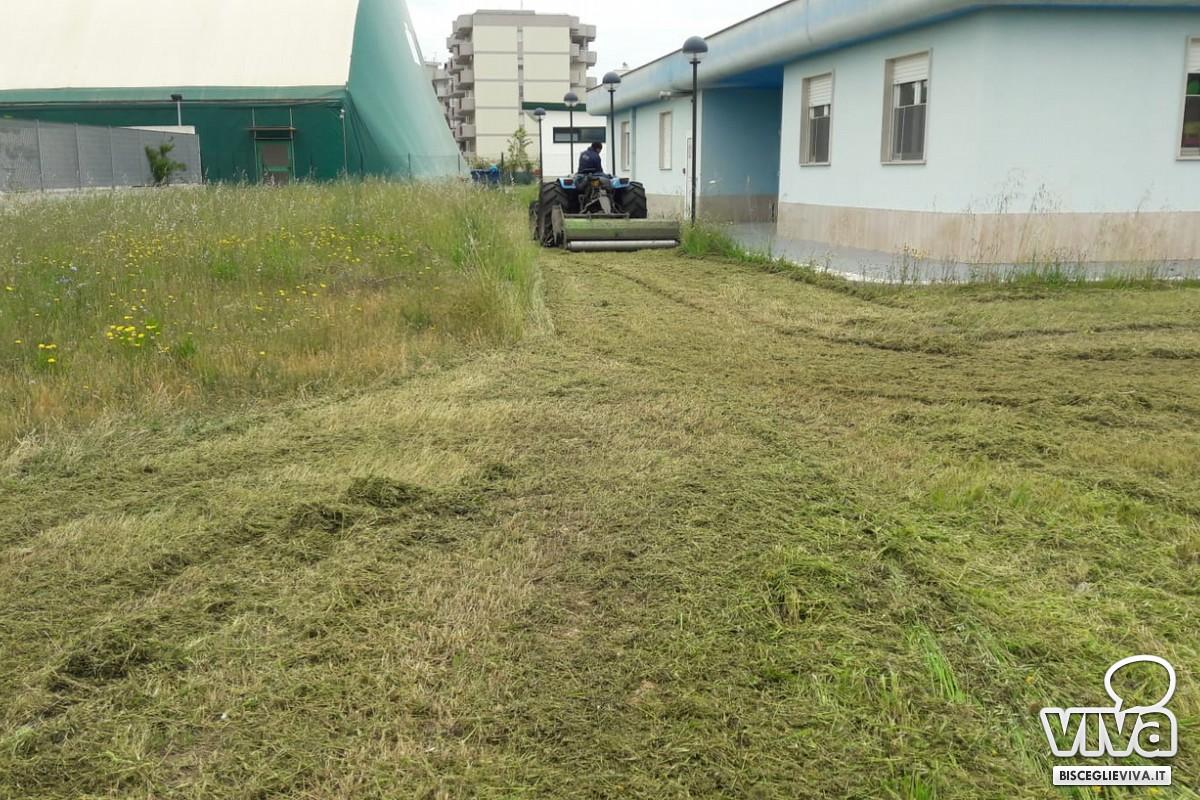 Interventi di manutenzione del verde nelle scuole e per le vie della città