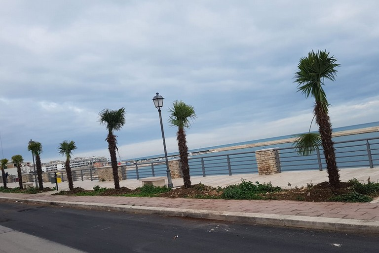 Palme piantate su lungomare di Bisceglie