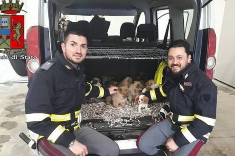 Salvati 26 cuccioli rinchiusi nel bagagliaio. Ora sono al canile di Riccione