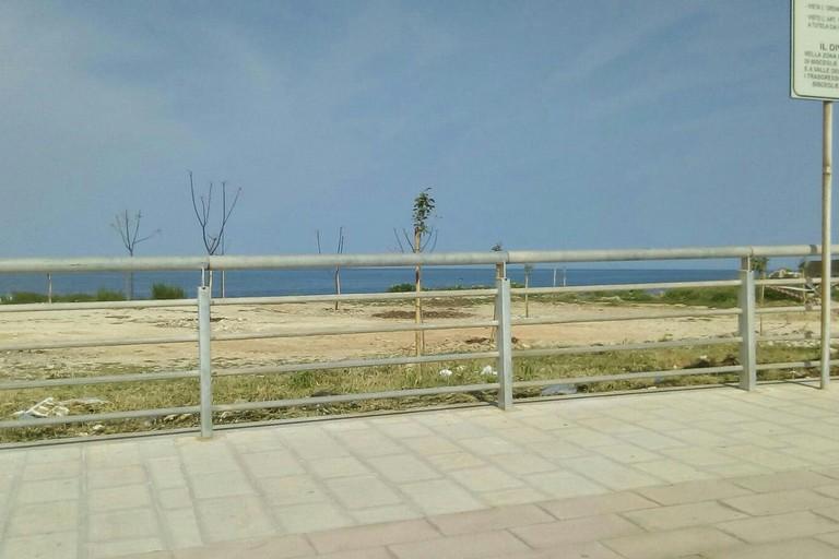 Piantumati nuovi alberi in zona Bimarmi