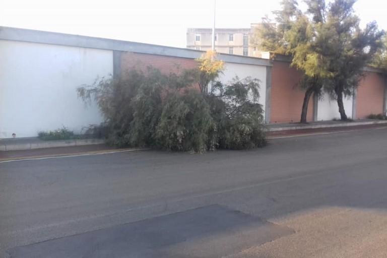 L'albero abbattuto dall'impatto con l'auto