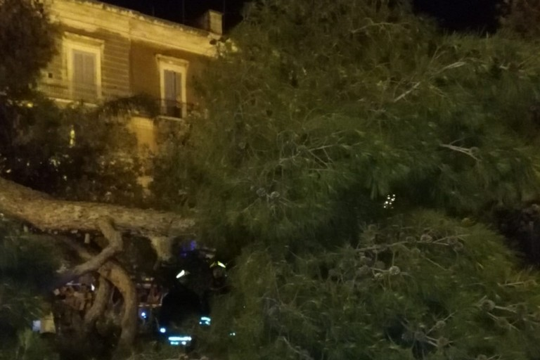 Le conseguenze della caduta del grosso ramo d'albero di pino in piazza Vittorio Emanuele II