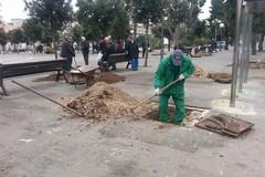 Verde pubblico: interrogazione del PD su abbattimenti, sostituzioni e catasto del verde urbano