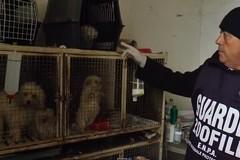 Tutela del benessere di cani e gatti: si inaspriscono i controlli