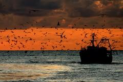 La Flai Cgil incontrerà i pescatori biscegliesi