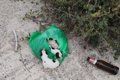 Orrore in zona BiMarmi, cuccioli abbandonati in un sacchetto di plastica