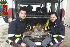 Agente biscegliese della Polstrada salva 26 cuccioli di cane