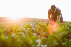 Rinnovato il contratto provinciale per il settore agricolo