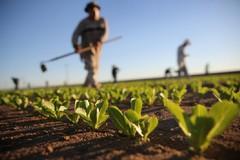 Confagricoltura Bari-Bat: «Le aziende danneggiate dalle gelate saranno risarcite»