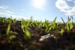 Bando per acquisto di macchinari, 2.8 milioni per le aziende agricole pugliesi