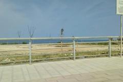 50 alberi donati dal Rotary Club Bisceglie per la zona Pantano-Ripalta