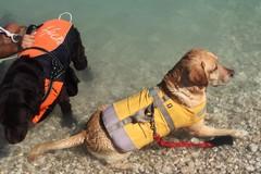 Sicurezza in mare, un aiuto concreto dagli amici a quattro zampe