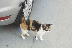 Investita e non soccorsa: la drammatica vicenda della gattina Bijoux