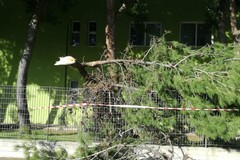 Il vento forte spezza i rami di un albero all'interno di una scuola
