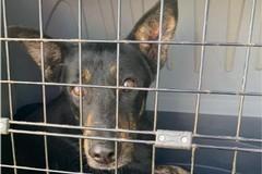 Prima reimmissione in libertà di un cane a Bisceglie secondo le nuove normative regionali