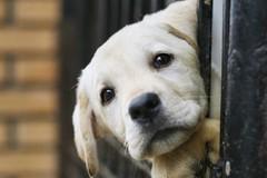 Contrasto al randagismo: veterinario gratis per chi adotta dai canili