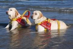 Nuovo appuntamento con le attività di addestramento in mare riservate alle unità cinofile
