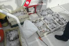Guardia costiera in azione contro il mancato rispetto del fermo pesca