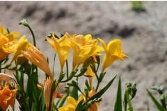 La Pasqua che vorrei