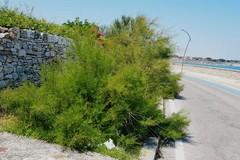 5 Stelle: «Percolato, rifiuti e degrado sulla litoranea di Ponente»