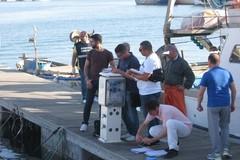 Controlli sul pescato, multe per 24 mila euro