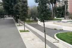 Cittadino dona un albero di leccio alla comunità biscegliese