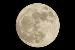 Randagio e la luna
