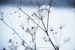 Possibili nevicate, allerta meteo diramata dalla Protezione Civile