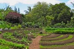 Rinviato il corso di Permacultura e Food Forest promosso da Abbraccio alla vita