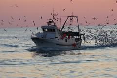 Il comparto pesca pugliese: «Il danno della crisi e la beffa della burocrazia»