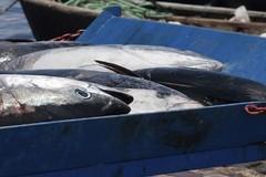 """Bando del Gal """"Ponte Lama"""", finanziamenti per la vendita diretta nel settore pesca"""