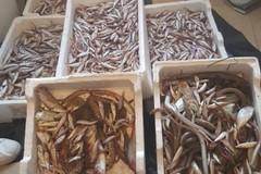 Violazioni alla pesca: operazione della Capitaneria di Porto di Barletta