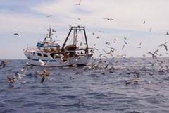 Comparto pesca in crisi per la chiusura di 20 mila ristoranti in Puglia