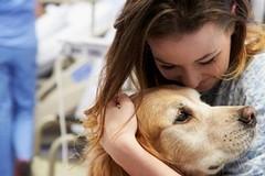 Primo caso in Puglia di pet visiting all'Hospice Universo Salute-Don Uva