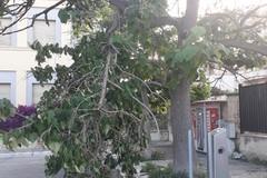 Grosso ramo d'albero si spezza davanti al parcheggio della stazione