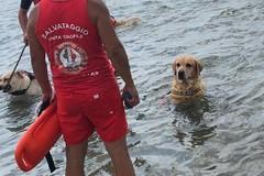 Una giornata in spiaggia coi cani da salvataggio
