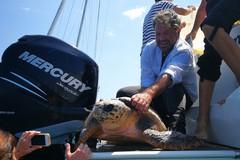 In corso il monitoraggio delle tartarughe del medio e basso Adriatico