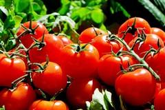 Pomodoro beauty
