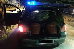 Rubano piante a Bisceglie ma vengono sorpresi da Metronotte e Carabinieri
