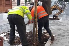 Piantumati due nuovi alberi in via Aldo Moro