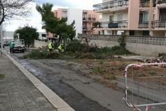 Gestione verde pubblico: abbattuti oltre 100 alberi in meno di un anno
