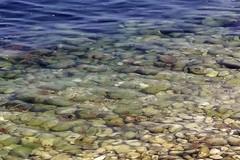 Alghe a mare, i bagnanti andriesi chiamano all'appello la stampa