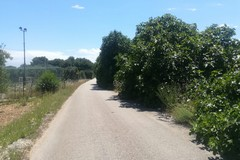 Di Leo: «Si metta in sicurezza il tratto di strada di Carrara Lama Paterna»