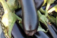 Grande caldo, Coldiretti: «Frutta e verdura bruciate nei campi»