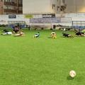 Ipotesi Serie A femminile per il Bisceglie Rugby