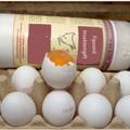 Anche in un allevamento di Bisceglie sequestrate uova positive al Fipronil